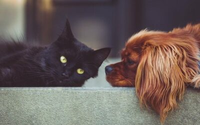 Prendre soin de nos animaux de compagnie